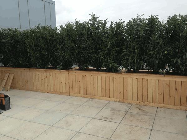 Terrance Planting